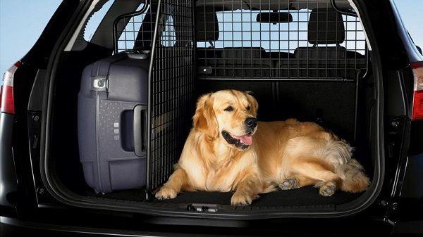 Особенности перевозки животных в автомобиле